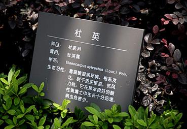 植物园花草牌